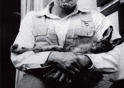 Beuys, Joseph. Como explicar pintura para uma lebre morta? 1965.